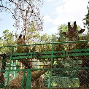 Алматинский зоопарк