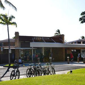 Аквариум Waikiki