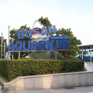 Sea Life Busan Aquarium